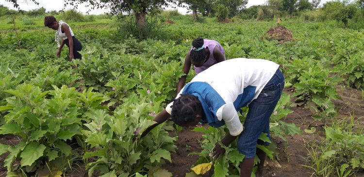 Youth South Sudanese working in the fields